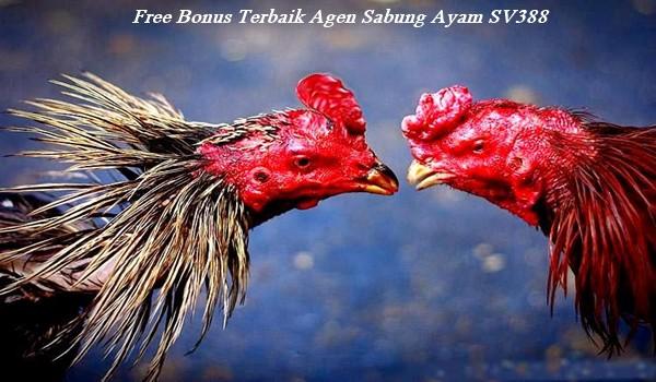 Free Bonus Terbaik Agen Sabung Ayam SV388